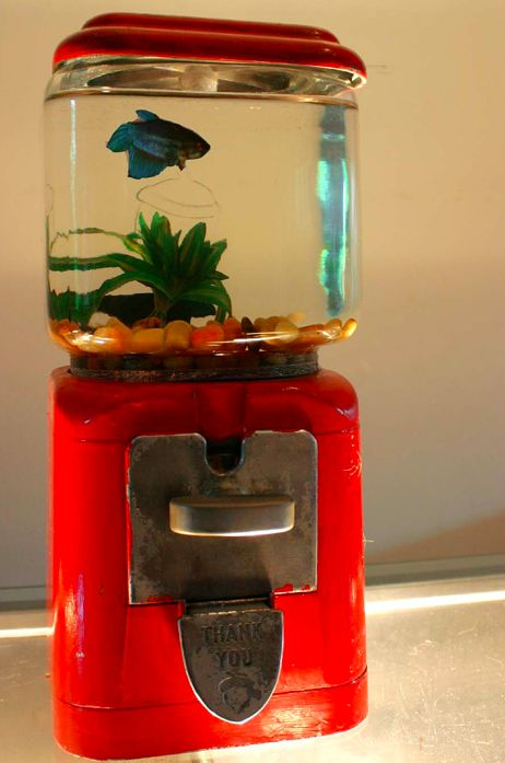 Gumball Fish Tank. If you have or can find a gumball machine consider upcycling it into a unique, attention-grabbing fish tank. So cool.