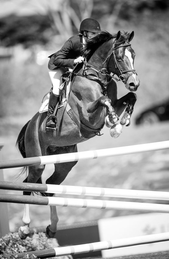 Copa Hermès 2013 #photography #animals #showjumping