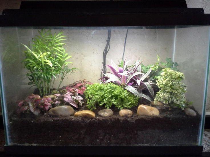 Turning an aquarium into a large terrarium.