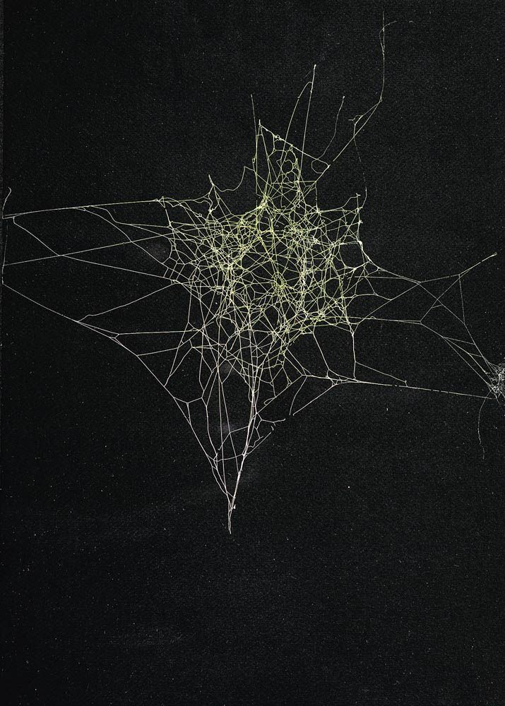 by Sandra Selig, Spider Web, 2010 / spider silk, enamel and fixative on paper