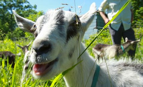 Buy a goat for someone overseas, but don't let that blind to you the part you play in their struggle.