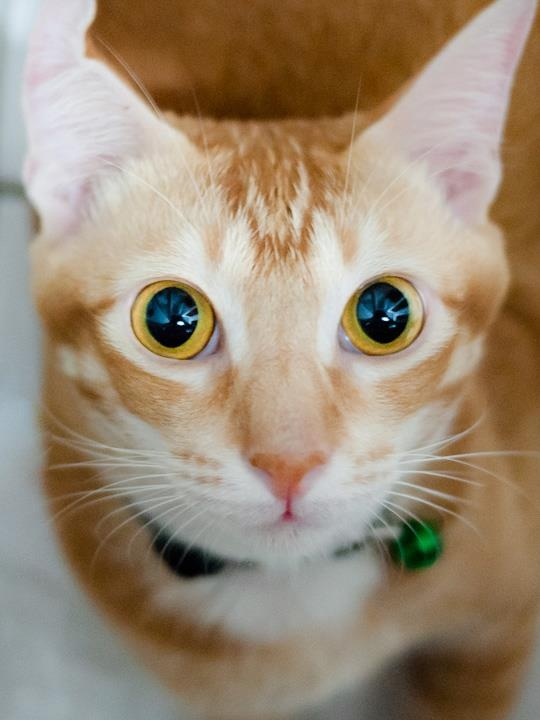 Can't resist it .... those eyes... XD