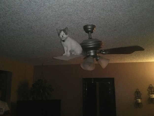 One day you're the president of your fraternity, and then you wake up on top of a ceiling fan. | 28 Cats Who Have No Idea How They Ended UpHere