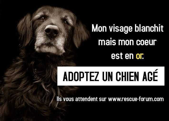 Mon visage blanchit mais mon cœur est en or. Adoptez un chien âgé.