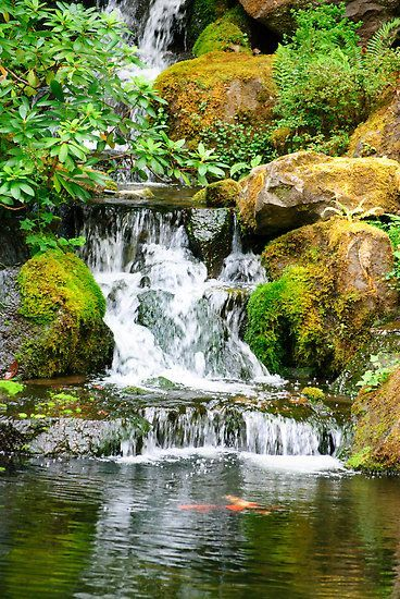 Japanese ponds designs waterfall diego re portfolio for Coy pond waterfall