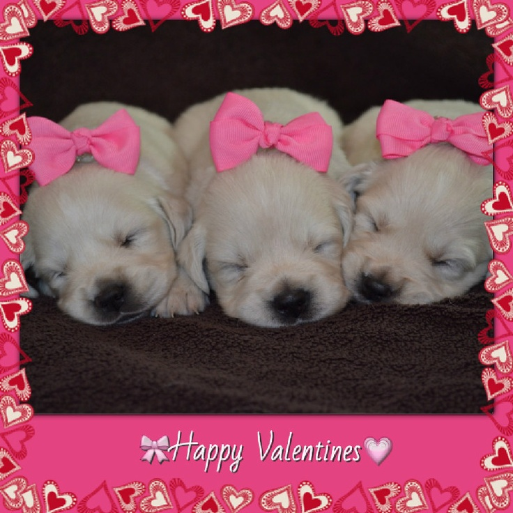 1000 images about puppy valentine on pinterest - Valentines day pictures with puppies ...