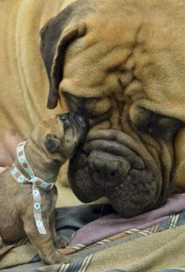 35 Animals Hanging Out With Miniature Versions Of Themselves: