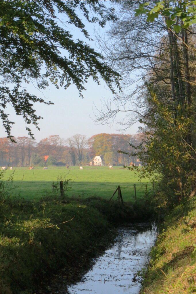 2014-11-02 Mooi doorkijkje over koeienweide nabij landgoed Boxbergen