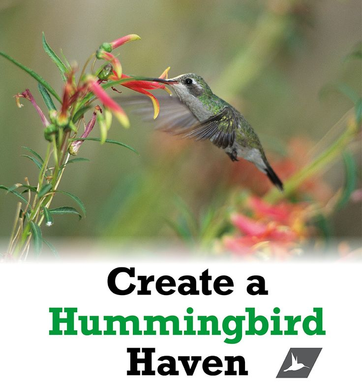 Do you hear that? No … No one's invading your yard. But with a little encouragement, you can persuade a few feathered friends to stop by. Here are a few ways you can transform your yard into a charming hummingbird habitat.
