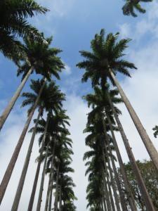 Rio de janeiro jardin botanique 38