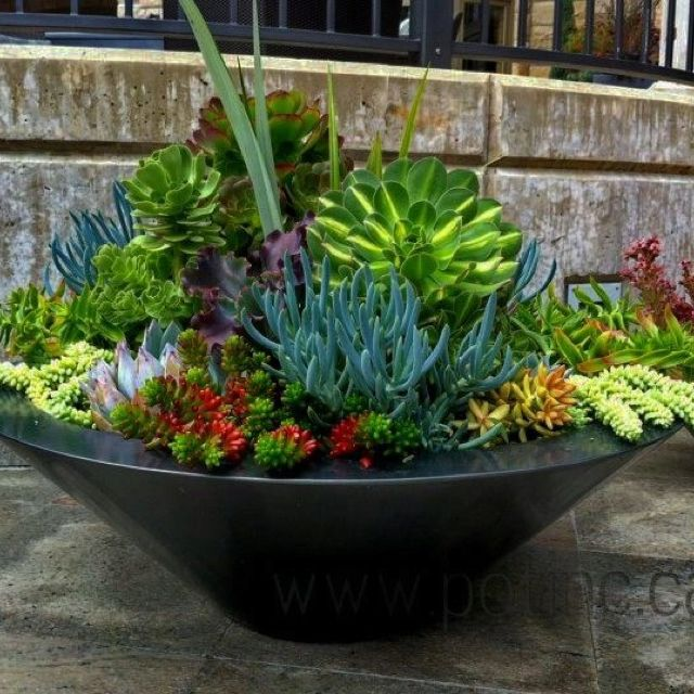 Best 25 succulent bowls ideas on pinterest succulents for Garden arrangement ideas