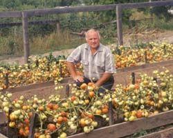 Что любят и не любят  томаты — ДАЧНИЦА
