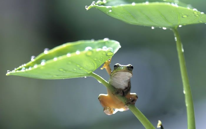 Top 30 National Geographic Frog Pictures Of All Time - Daily News Dig