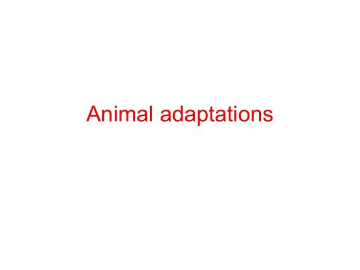 Shark adaptations slides 7 & 8