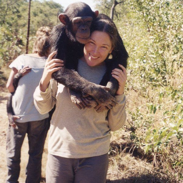 After reading this I am definitely adding Chimfunshi Wildlife Orphanage to my bucket list. You get to volunteer with chimps and if you're lucky take them into the forest for play time! Sounds like such an incredible experience!