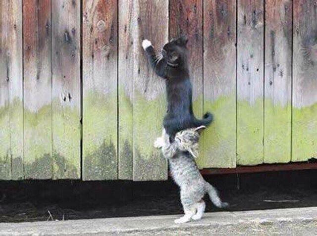 Push harder! I must over!