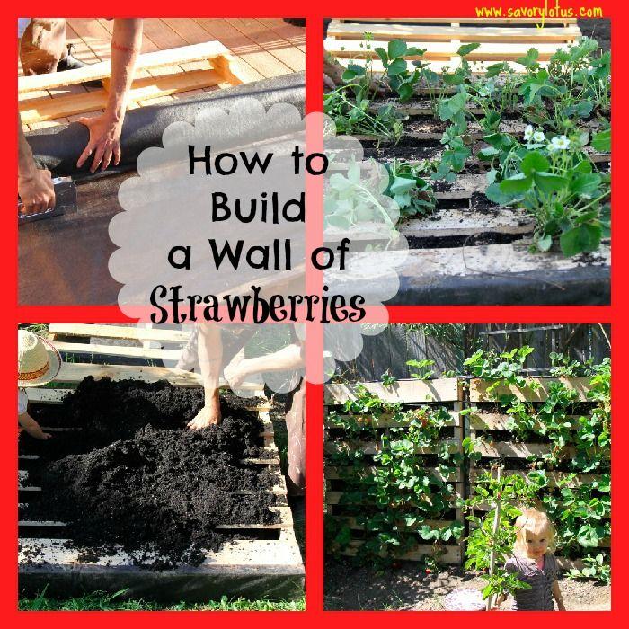 pallet strawberries