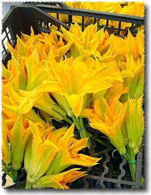 How To Fry Zucchini Blossoms: Select your Zucchini Blossoms