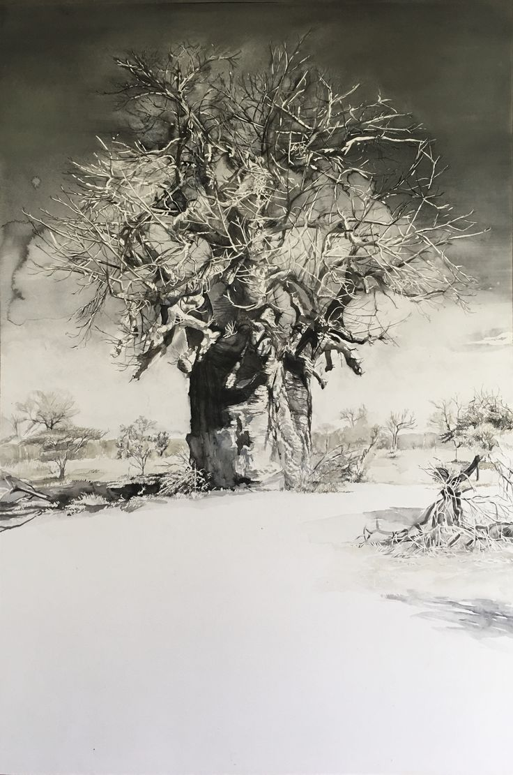 Karin Dando  Boabab tree 2018 watercolour on paper 105 x 72.5 cm