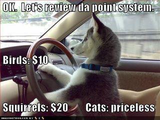 #Husky humor from r #dogrescue! This is us: https://www.facebook.com/HuskyMomAtSiberianHuskyRescueOfFlorida