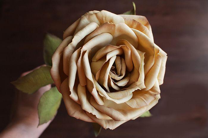 Rose of tameran 50 Ideas 008