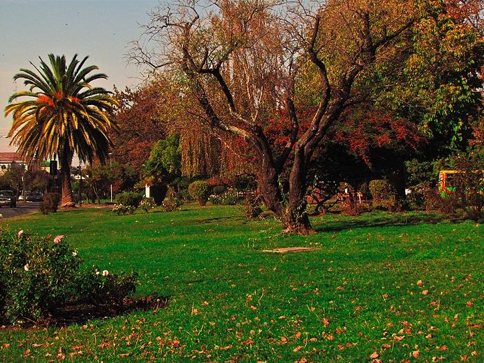 Av. Ricardo Vicuña. Los Angeles, Chile.  By REG.
