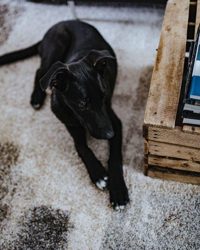 A szőnyeg kényelmeinek élvezete a kutyáknak is kijár. 😍 🐶 #kutya #dog #kényelem #szőnyeg #drpadlo