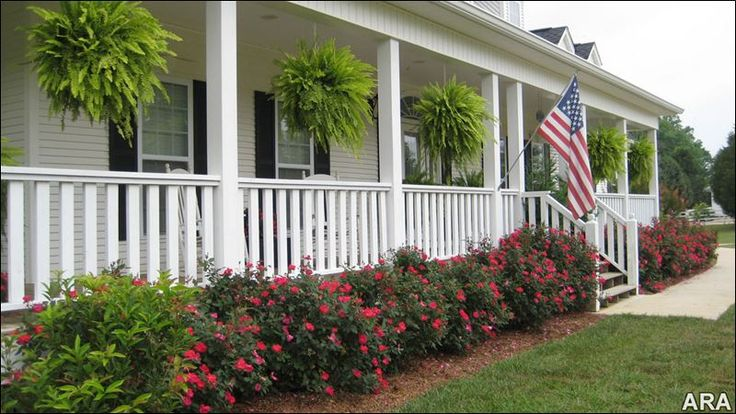 How to add roses to your spring garden toledo blade for Front porch landscaping plants
