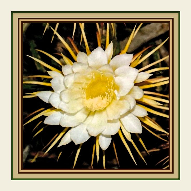 """Night Blooming Cereus, One of 5 Different 12""""x12"""" Floral Inspirations. Frame Ready with Printed Mats. Luscious Colors. Beautiful in Groups. by VintageArtForLiving on Etsy https://www.etsy.com/listing/578371816/night-blooming-cereus-one-of-5-different"""
