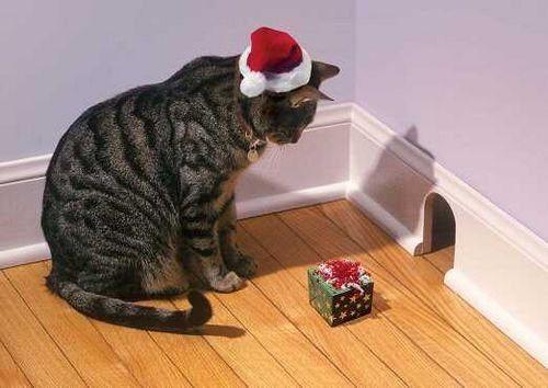 Regalo di Natal gatto e topo