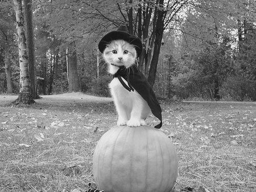 halloween, animal, black and white, cat