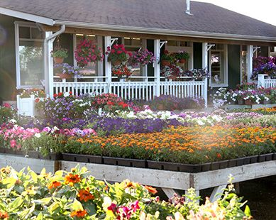 TERRA's Vaughan Garden Centre is one of the most popular nurseries in Vaughan having a wide range of garden plants, flowers, trees and home décor items to transform your yard.