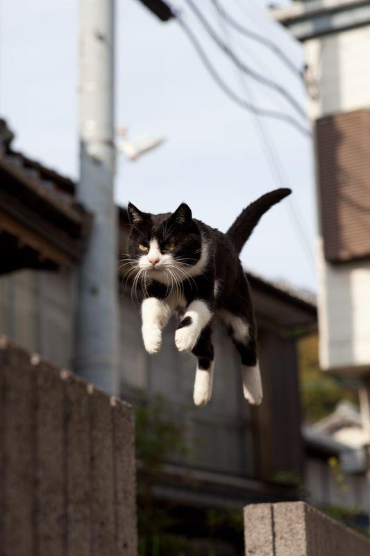 jumping cat 3                                                       …                                                                                                                                                     もっと見る