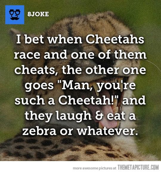 When Cheetahs cheat…lol