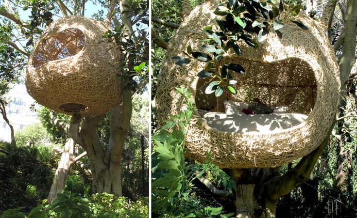a weaver's nest perched slightly above ground in a tree  2 x 1.9 x 1.9 m