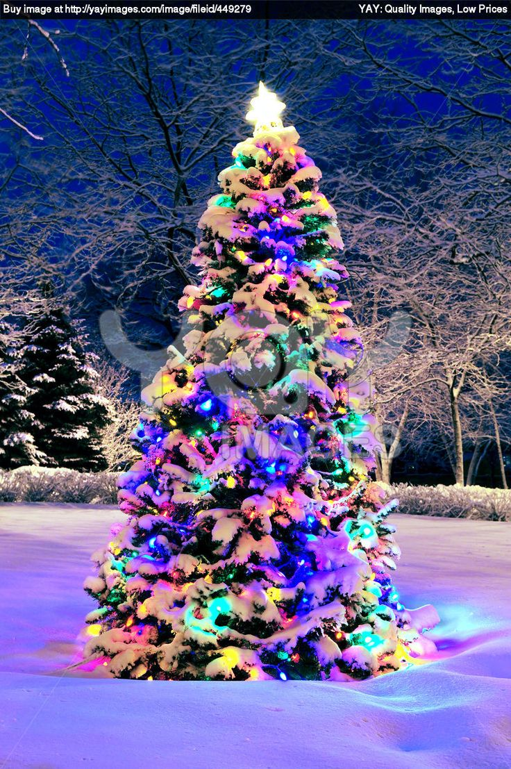 123 best christmas lights images on pinterest christmas time