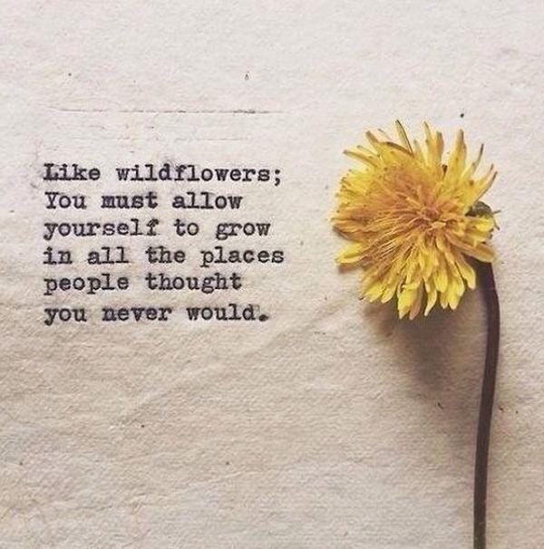 Best 25 Flower Qoutes Ideas On Pinterest