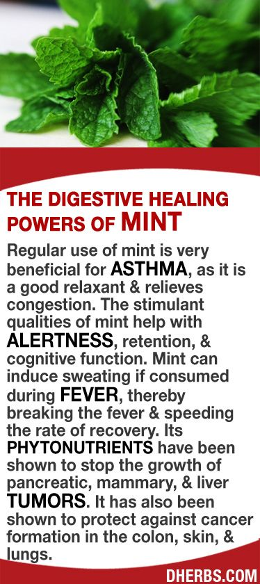 Regular use of mint is very beneficial for asthma, as it is a good relaxant & relieves congestion. The stimulant qualities of mint help with alertness, retention, & cognitive function. Mint can induce sweating if consumed during fever, thereby breaking the fever & speeding the rate of recovery. Its phytonutrients have been shown to stop the growth of pancreatic, mammary, & liver tumors. It has also been shown to protect against cancer formation in the colon, skin, & lungs. #dherbs…