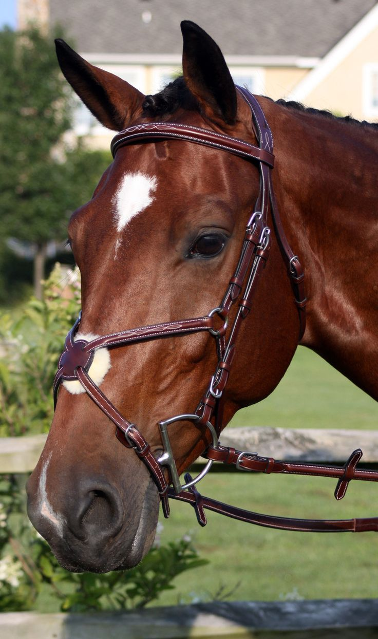 Part of the new Bellissimo Collection from Nunn Finer, the Milano bridle is a bridle without comparison and a true work of art. Raised fancy stitched Italian leather with a raised and fancy stitched f