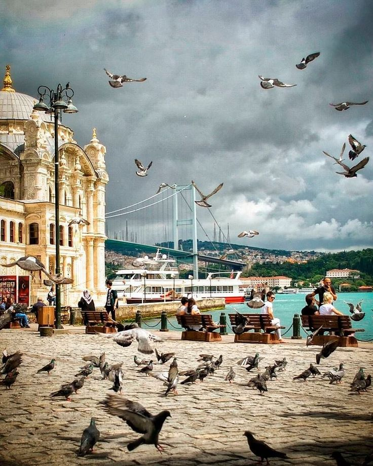 t's not just the birds that flock to Ortaköy, it'll be you too! What a stunning location!⠀ ⠀ :___rightway___/IG⠀