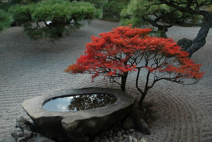 PERFECTION - Stone basin & Japanese maple in autumn foliage, Ritsurin Park, Takamatsu, Japan.