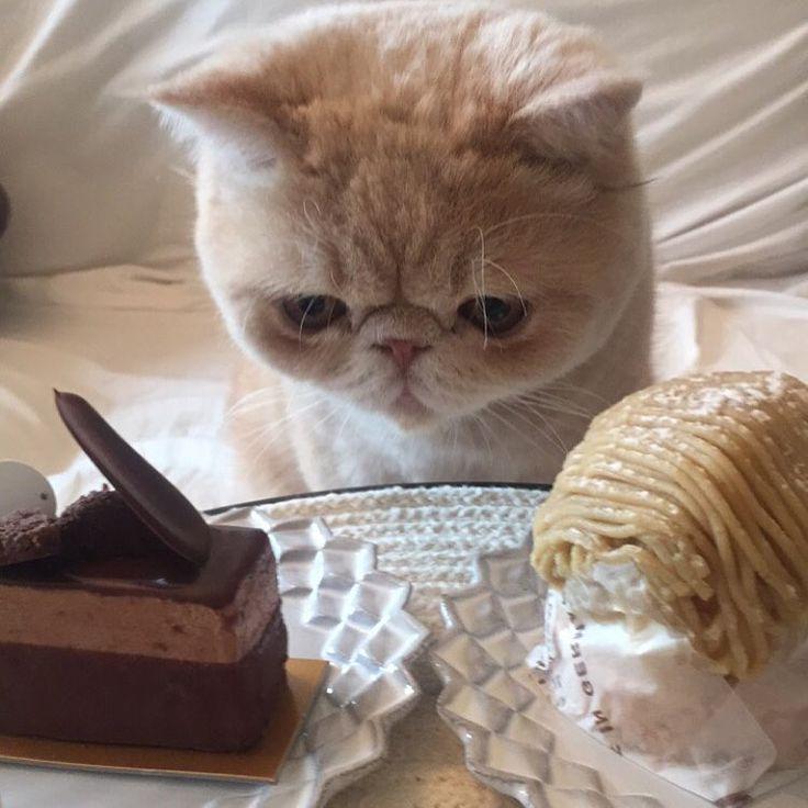 おはようございマッシュ! 僕は見てません。。 ダイエット中だからSweetsを 見ないようにするんだ! どこみとる
