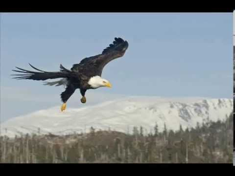 Bald Eagles Galore Natures Photo Adventures