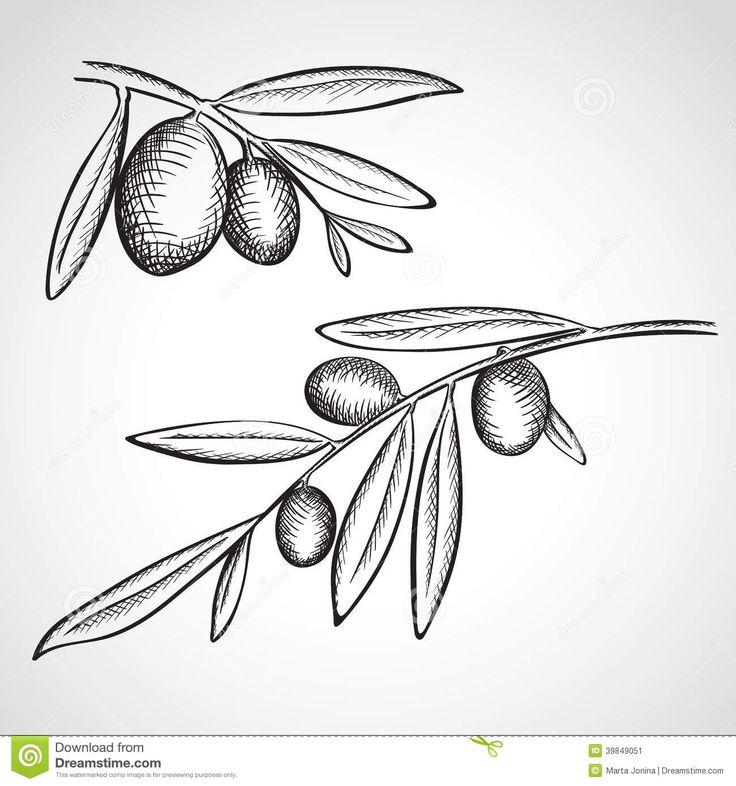 olive tree sketches - Google-søk