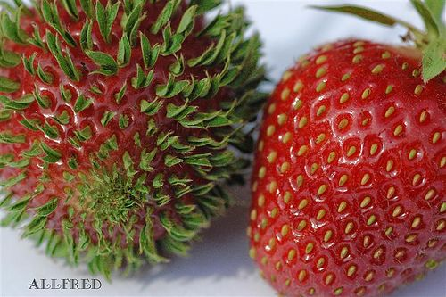 Strawberry with all the seeds already sprouting...very cool!