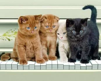 Kittens on a piano.