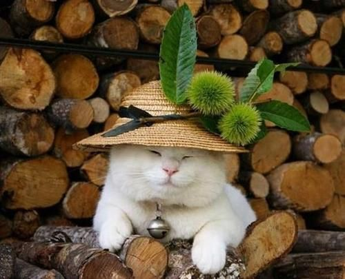 (▰˘◡˘▰)  Does this cat feel autumn?