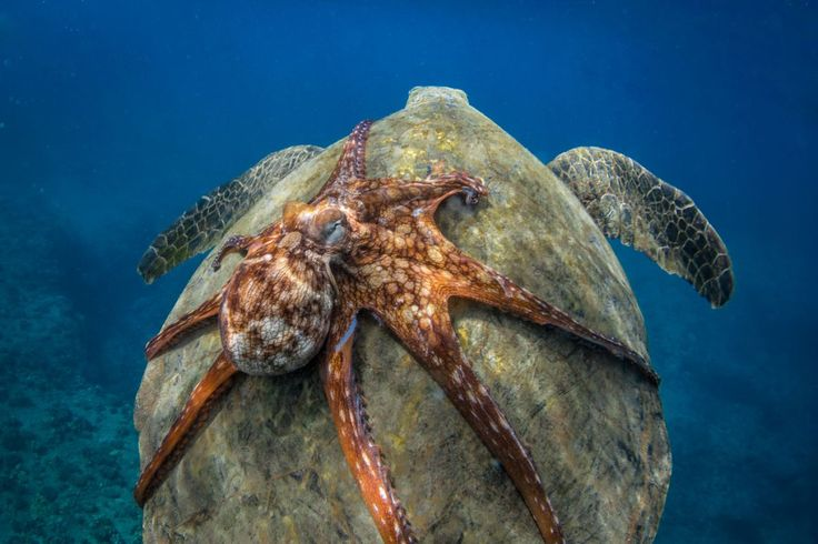 Amazing Highlights from Smithsonian's 14th Annual Photo Contest