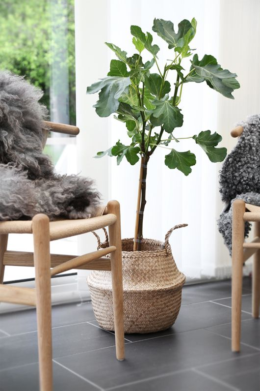 Fiddle Me Timbers: 7 Drool-Worthy Interiors with Fiddle Leaf Figs - Paper and Stitch
