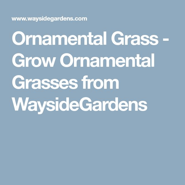 Ornamental Grass - Grow Ornamental Grasses from WaysideGardens